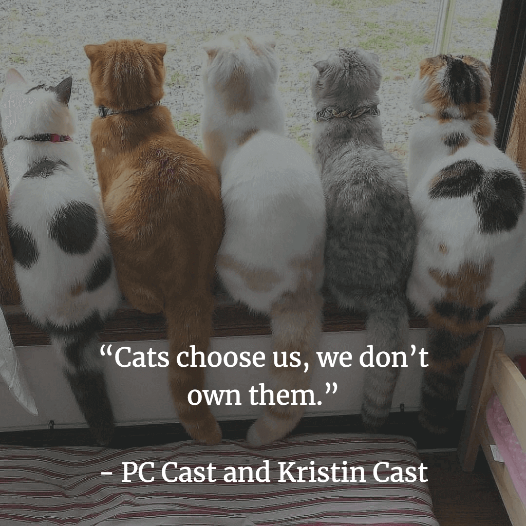 cats choose us, we don't own them