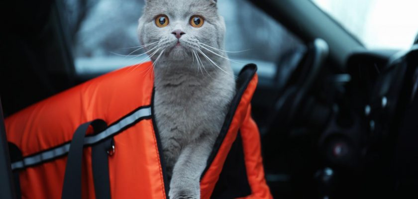 cat carrier featured pic